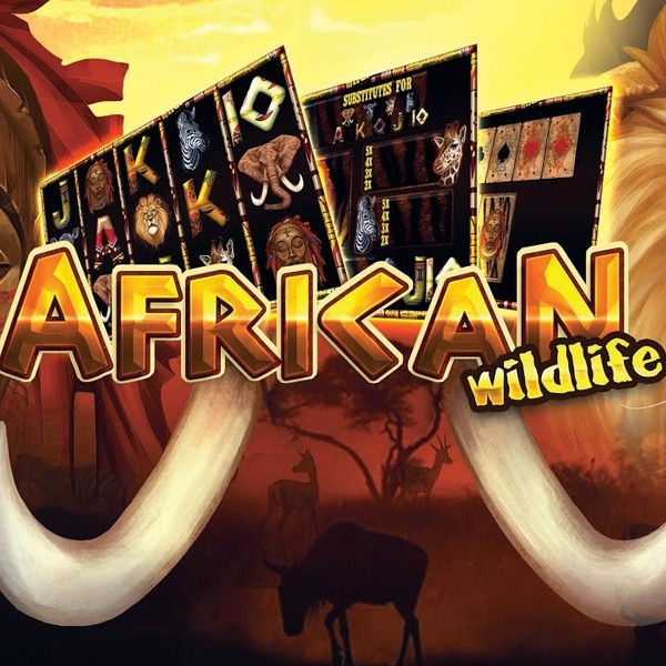 African Wildlife SA • 918Kiss Trusted Agent Malaysia • Liveslot77 Top Online Casino 2020