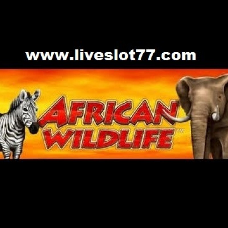 Free Play & Win African Wildlife Slot  In XE-88 Registration 2020 @ LiveSlot77